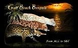 Gulfbeach Bengals