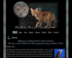Midnite Moon Ocicats